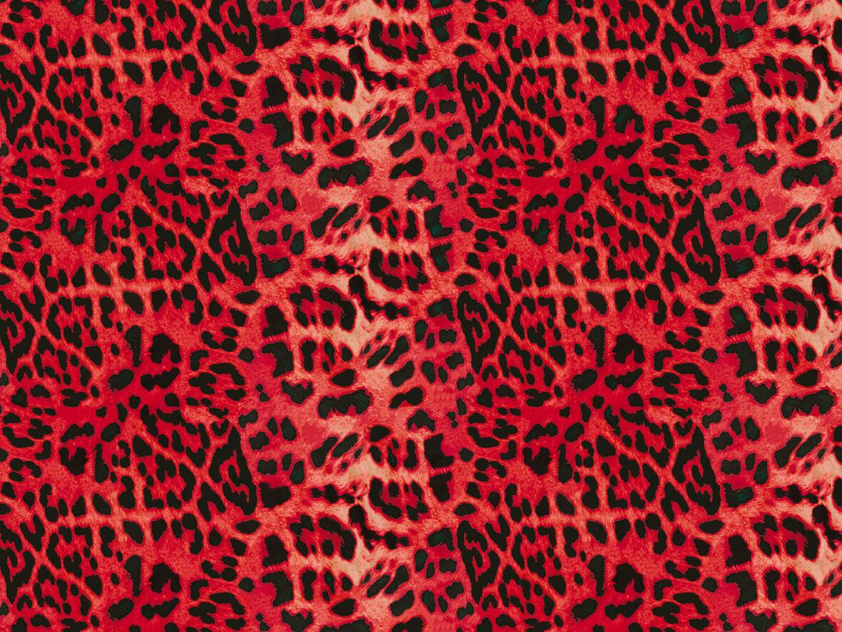 leopardo_rosa